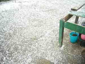 hail stones in spring